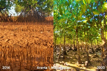 Comparison in trees planted