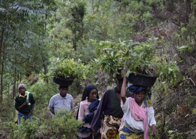 Carrying tree saplings to plant in a forest